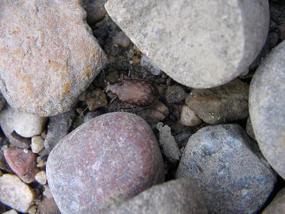 beetle-small.jpg